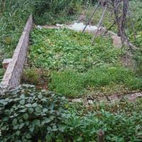 65m2 đất đường To 35m, Ngõ Thông, Cách Cầu đông Trù 1,5km Tại Thôn Thái Bình (trong đê)